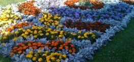 Устройство цветников и композиций